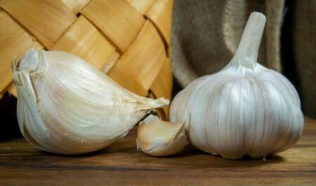 benefits of elephant garlic.