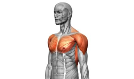 Incline Bench Press Technique - Front Shoulders Muscles