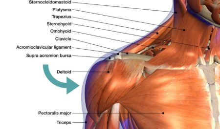 Incline Barbell Bench Press - Deltoid Muscle