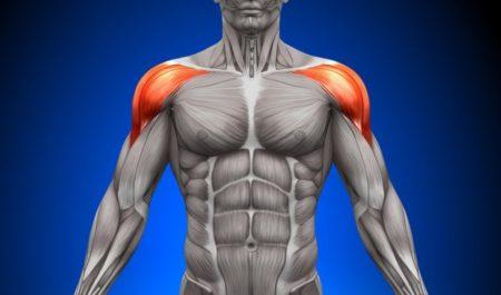 Deltoid Workout - front deltoids muscles