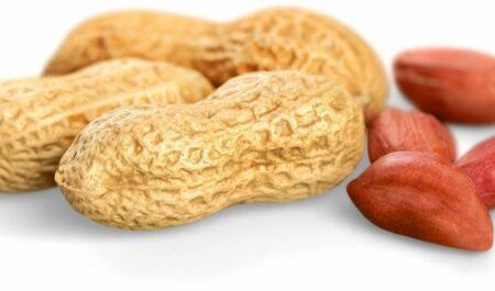 Peanut Butter Sandwich - peanut