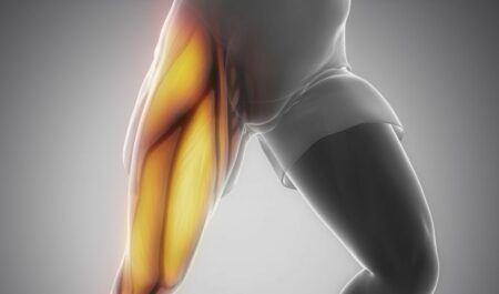 Inner Thigh Muscles - thigh muscles